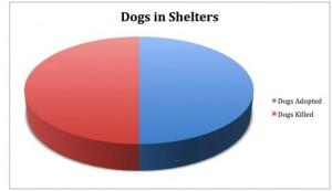 puppymills vs shelters essay