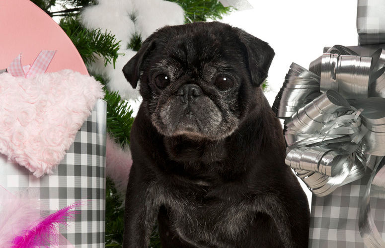 presents-for-pugs