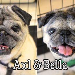 Axl & Bella
