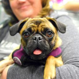 Darla - Adopted