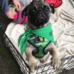 Doug - Adopted
