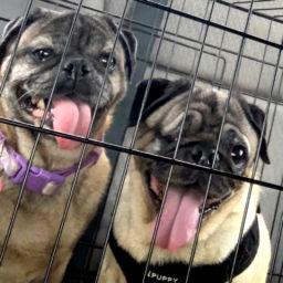 Harley & Jack - Adopted